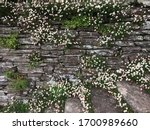 Dry Stone Wall And Steps...