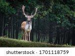 Deer Are The Hoofed Ruminant...