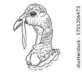 Vector Sketch Head Of Turkey...