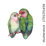 Watercolor Love Birds Isolated...