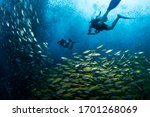 Beautiful Image Of Scuba Divers ...