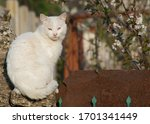 Street Stray Cats.  Dirty Whit...