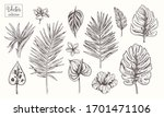 collection of tropical plants ... | Shutterstock .eps vector #1701471106