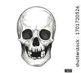 hand drawn vintage human skull... | Shutterstock .eps vector #1701720526