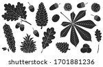 Acorn Of Oak Black Vector Set...
