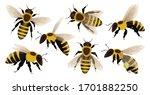 Honey Bee Isolated Cartoon Set...
