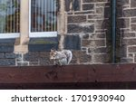 Close Up Of Gray Squirrel On A...
