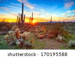 Sun Is Setting Between Saguaro...