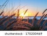 Grassy Tropical Sunrise