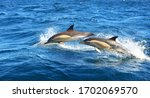 Two Dolphins Jumping In The...