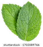 Green Mint Pepper Leaf Isolated ...