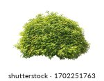 Plant Bush Tree Isolated...