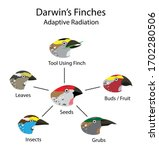 illustration of biology and animal, adaptive radiation diagram, evolutionary biology, Darwin