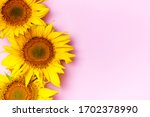 Yellow Sunflowers On Pink...