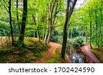 Autumn Forest Park Trail...