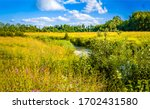 Rural Meadow Creek In Sunny Day....