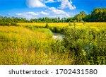 Rural meadow creek in sunny day. Summer meadow creek landscape. Meadow creek view