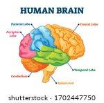 human brain vector illustration.... | Shutterstock .eps vector #1702447750