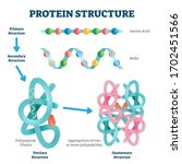 Protein Structure Vector...