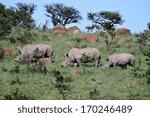 Three Endangered White Rhinos...