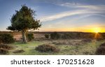 Stock photo a star burst of sunlight at bratley view in the new forest national park in hampshire 170251628
