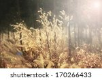 Foxtail Weed Grass Flowers In...