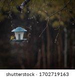 Yellow Finch Bird Sitting In...