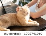 the cat is lying on the table... | Shutterstock . vector #1702741060
