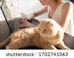the cat is lying on the table... | Shutterstock . vector #1702741063