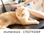 the cat is lying on the table... | Shutterstock . vector #1702741069