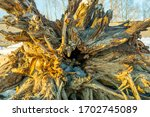 Tree Trunk With A Root Ashore...