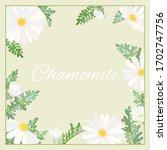 Chamomile Leaves Flowers Frame...