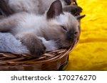 Stock photo nice kitten is sitting in basket 170276270