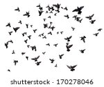 silhouettes of pigeons. many... | Shutterstock . vector #170278046