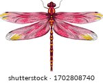 Pink Yellow Dragonfly With...