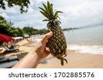 Pineapple In Man Hand On Summer ...