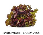 Fresh Red Lettuce Isolated On...