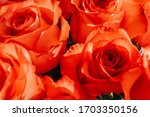 There Are Red Roses In The...