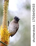 This South African Bird Is An...