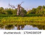 river  trees. pripyat river in...   Shutterstock . vector #1704038539