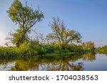 river  trees. pripyat river in...   Shutterstock . vector #1704038563