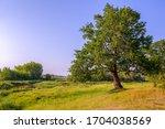 oak tree. oak in the meadow....   Shutterstock . vector #1704038569