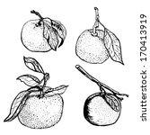 Tangerine Sketches