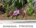 Pink Service Dog Harness On A...