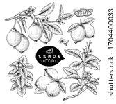vector sketch citrus fruit... | Shutterstock .eps vector #1704400033