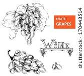 hand drawn illustrations of... | Shutterstock .eps vector #170443514