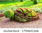 Turtle Shaped Bush In The...