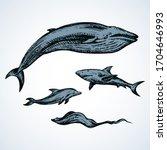 big atlantic flipper baleen...   Shutterstock .eps vector #1704646993