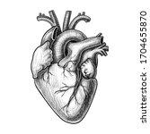realistic vector heart  hand...   Shutterstock .eps vector #1704655870