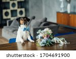 The Dog Jack Russell Terrier...